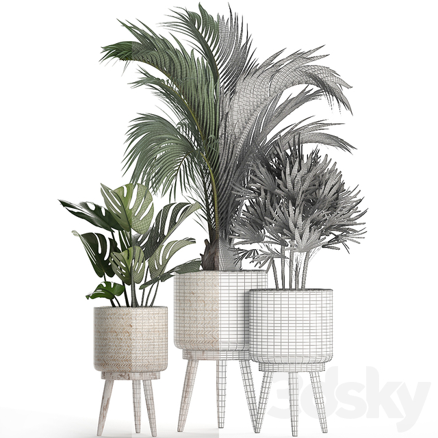 Plant Collection 427.
