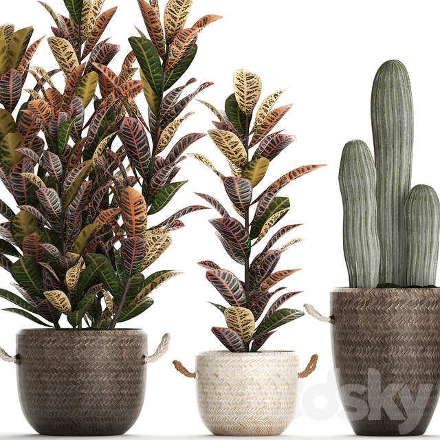 Collection of plants 430.