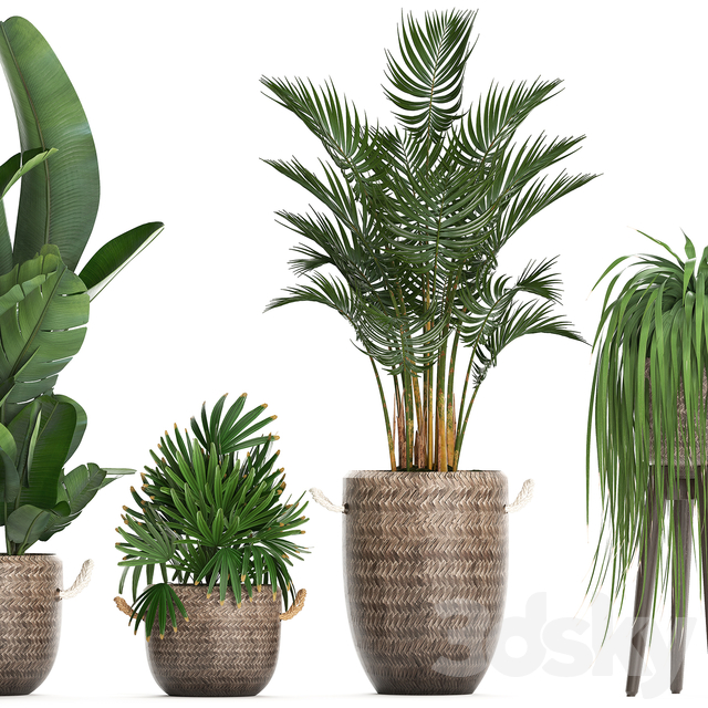 Plant Collection 431.