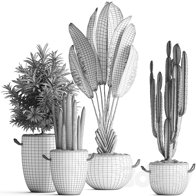 Plant Collection 434.