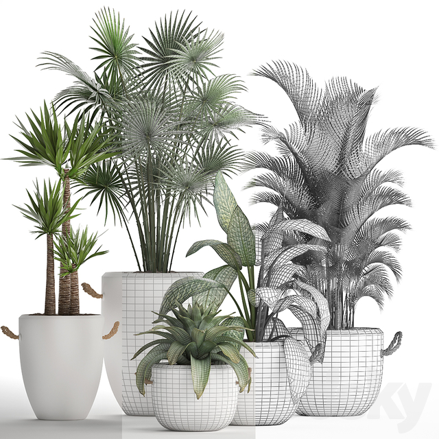 Plant Collection 436.