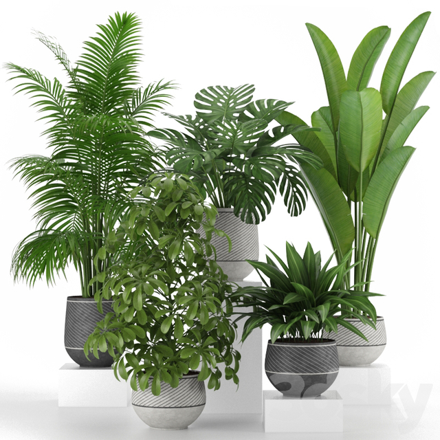 Plants collection 06