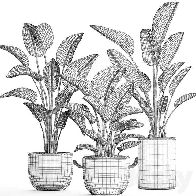 Plant Collection 445.