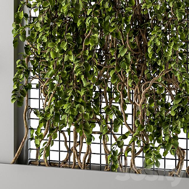 ivy Box Plants Gray