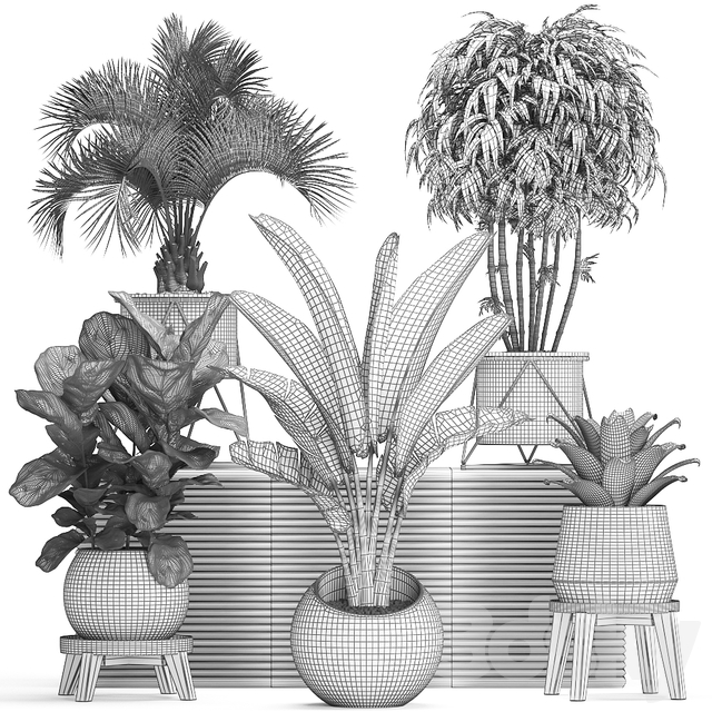 Plant Collection 463.