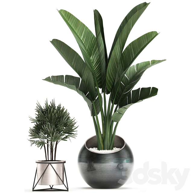 Collection of plants 464.