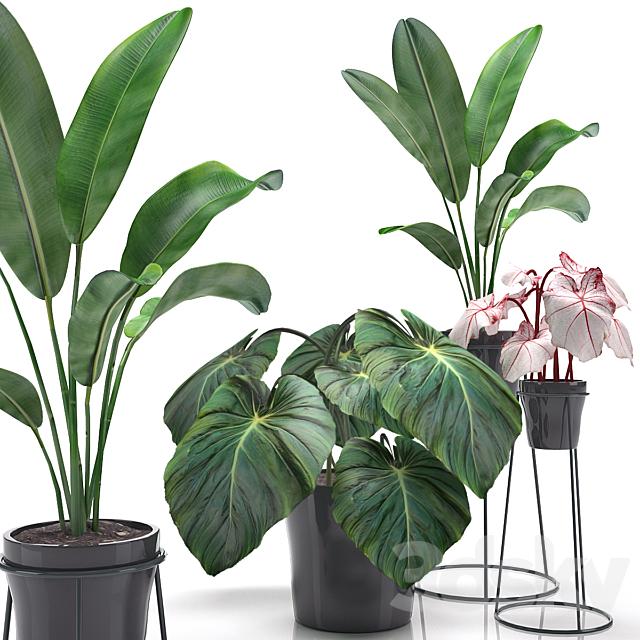 Indoor flowers in flower pots