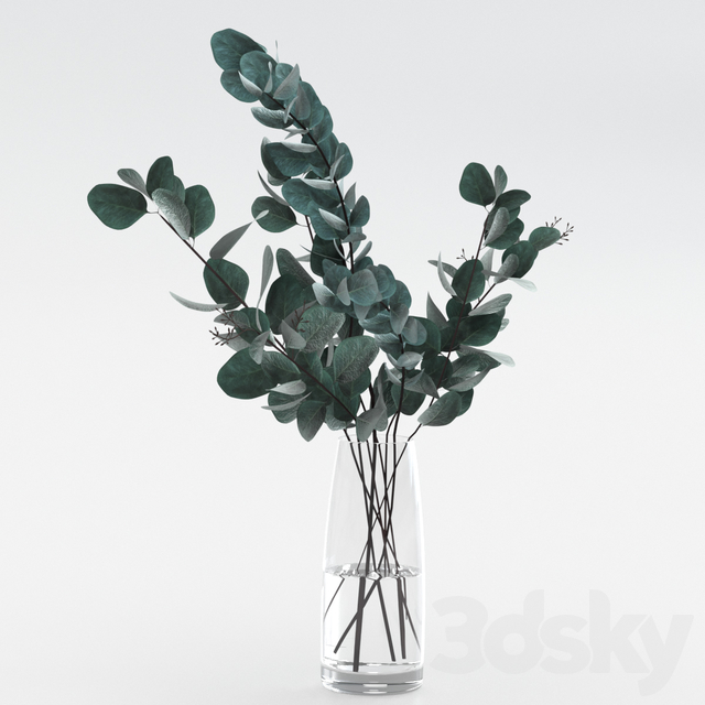 Bouquet of Eucalyptus Twigs
