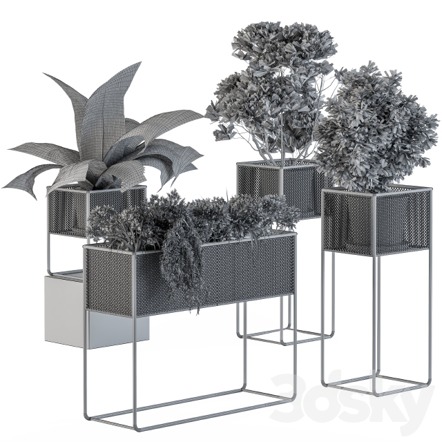 Home Set Plants Metal Box