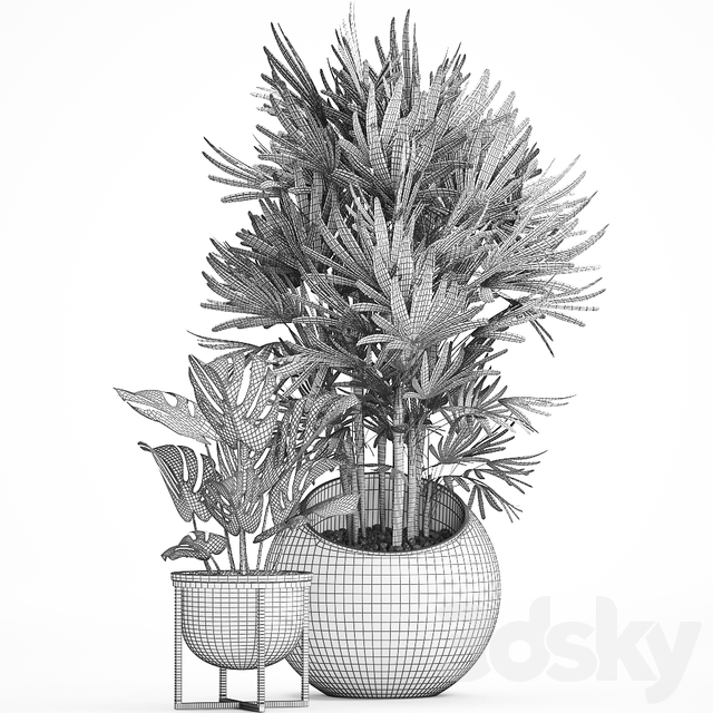 Collection of plants 466.