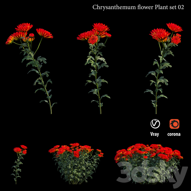 Chrysanthemum flower plant set 02