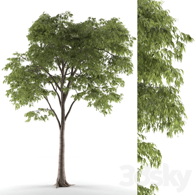 tree 54
