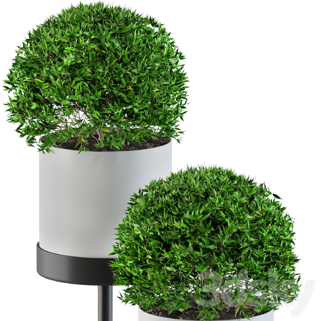 White round plant box with Round Plants
