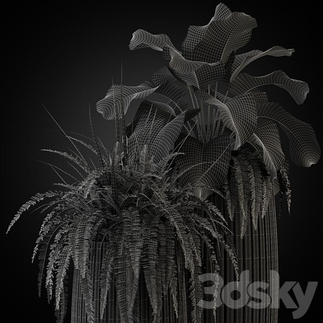 Plants collection 273 Fleur ami LINES