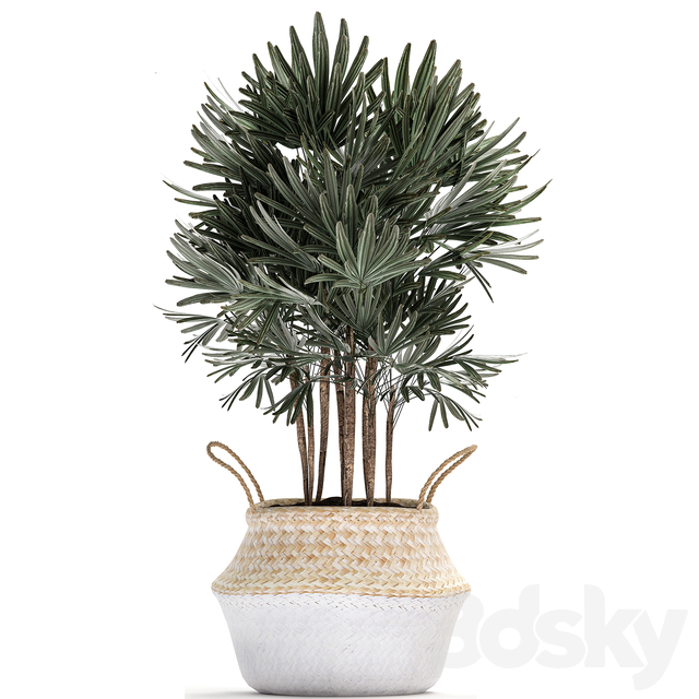Plant Collection 484.