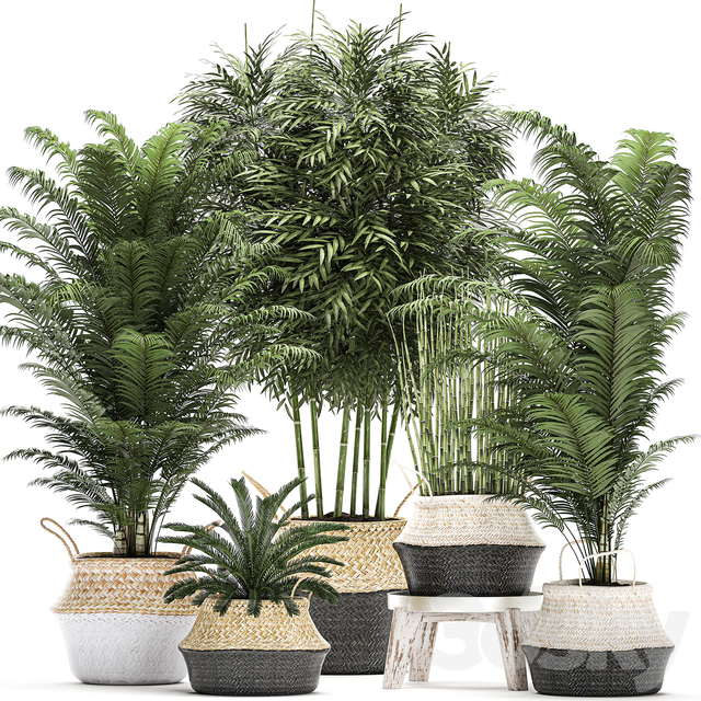 Plant Collection 489.