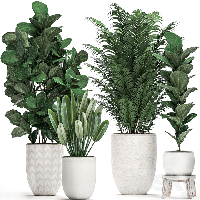 Plant Collection 490.