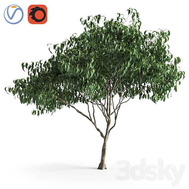 plant 58 B
