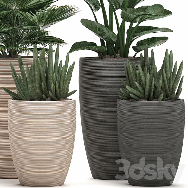 Plant Collection 498.