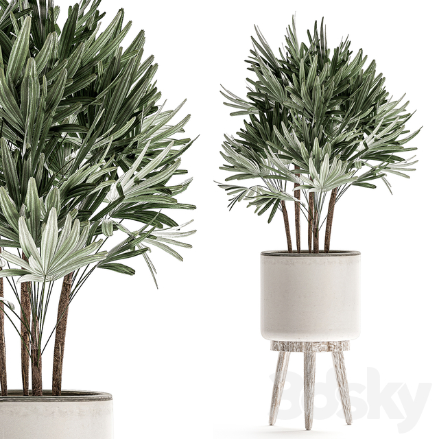 Plant Collection 509.