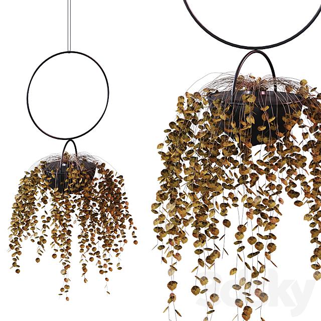 Hanging Planter Plant # 2 / BLUMENKUGEL EDITION