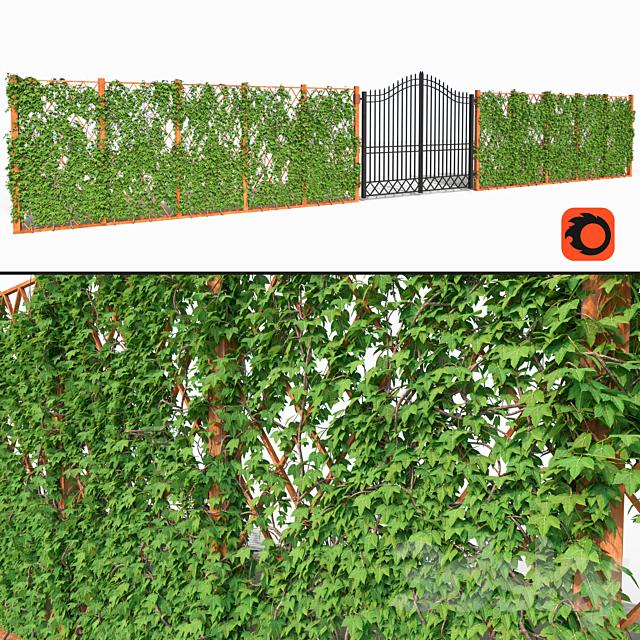 Ivy fence