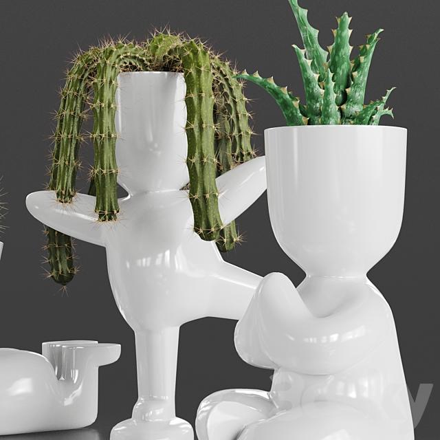 Cacti Set