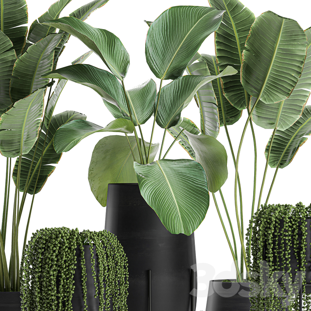 Plant collection 700.