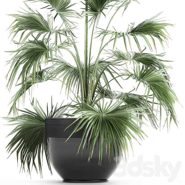 Plant collection 712.