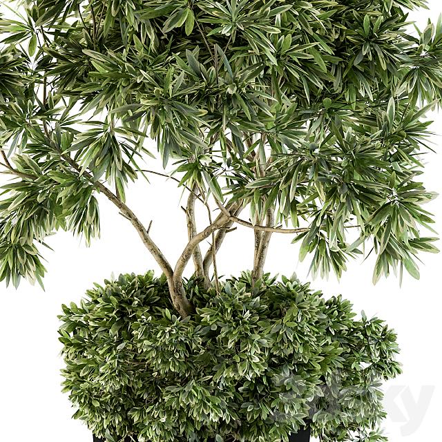 indoor Plant Set 96 - olive