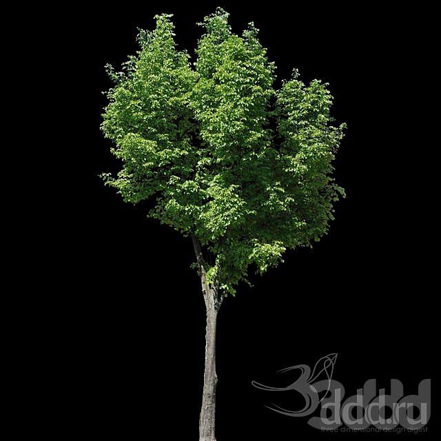 TEXTURE - Alpha masked tree