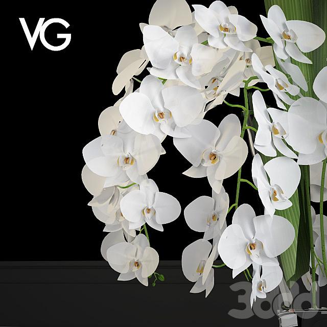 Декоративная композиция из орхидей VG