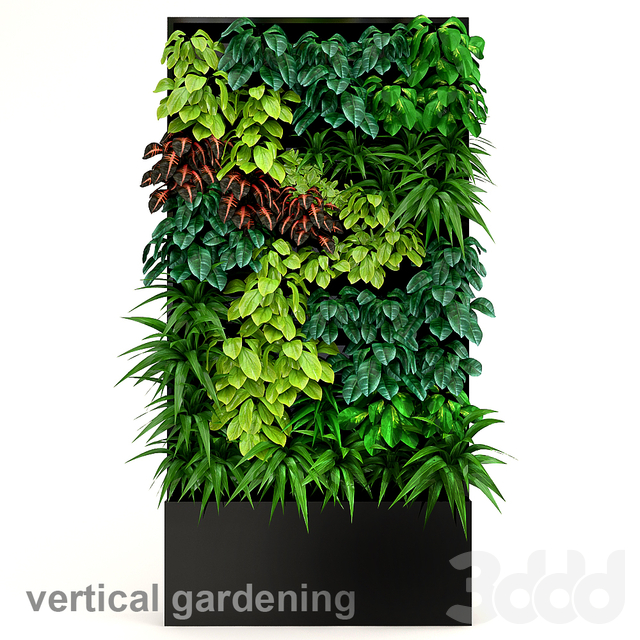 Vertical gardening 2