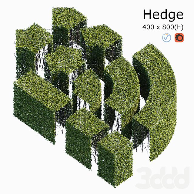 Hedge 4x8