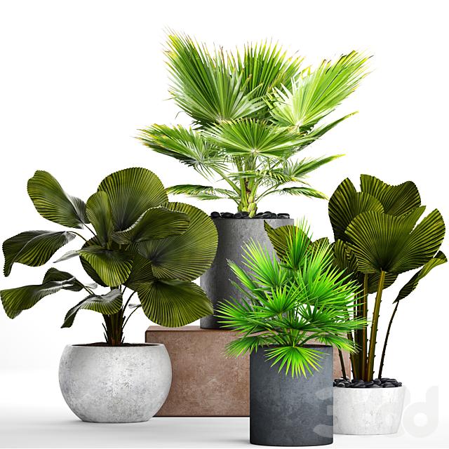 Коллекция растений в горшках 21