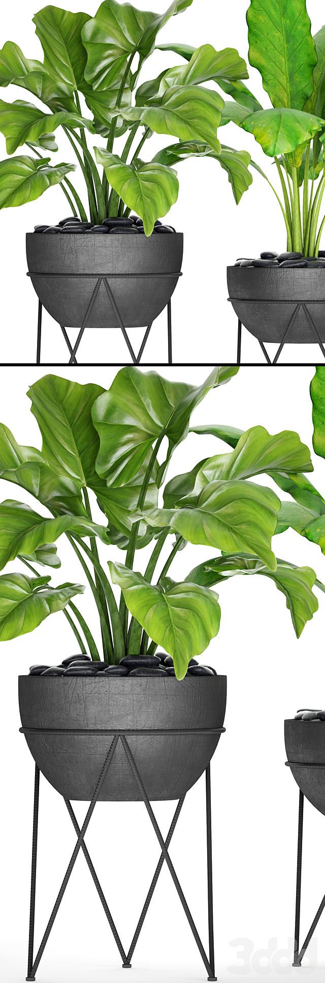 Коллекция растений в горшках 25