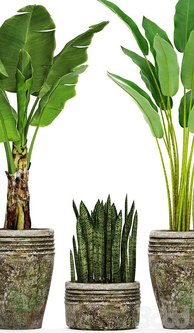 Коллекция растений в горшках 37