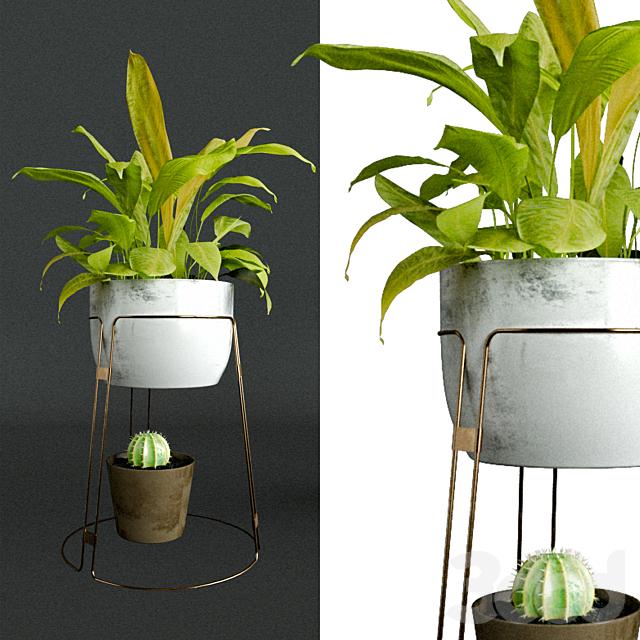 Растения в интерьер