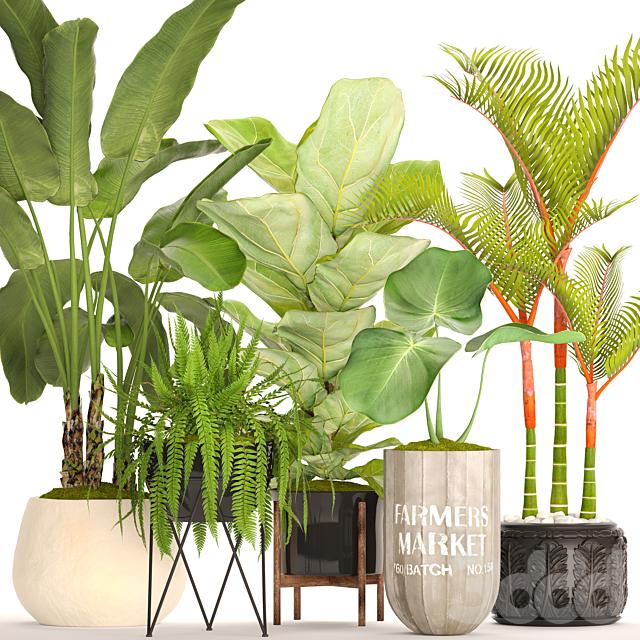 Коллекция растений в горшках. 48
