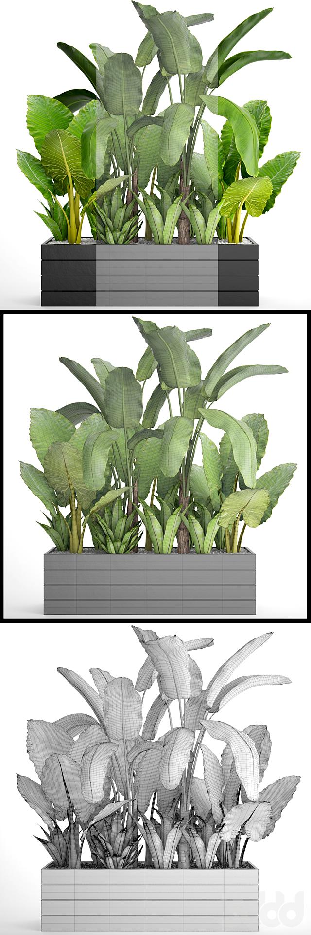 Коллекция растений 67