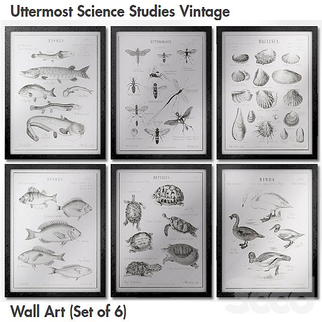 Uttermost Science Studies Vintage Wall Art (Set of 6)