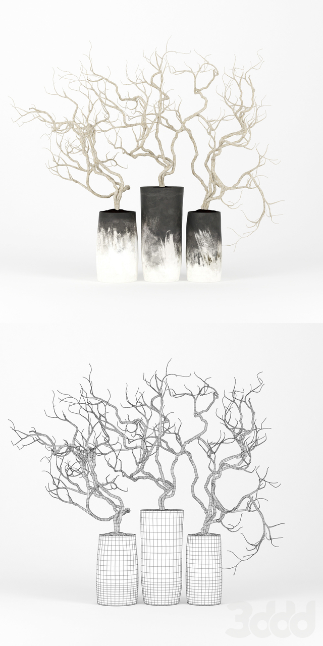 Set Branch