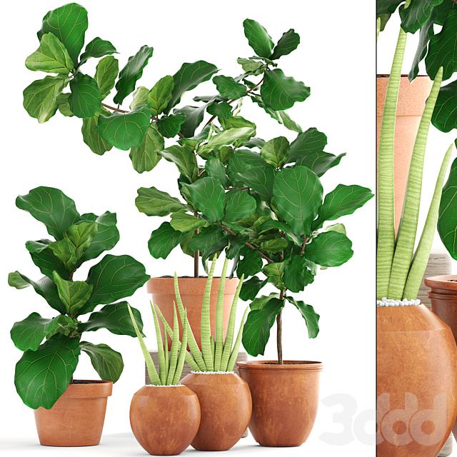 Коллекция растений 170.