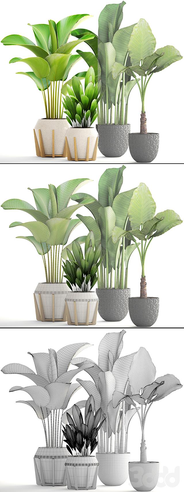 Коллекция растений 174.