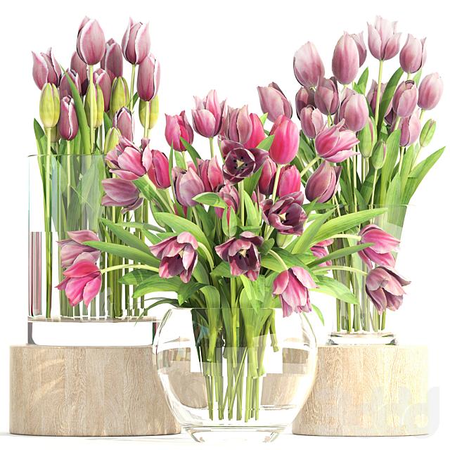 Коллекция цветов 2. Тюльпаны.