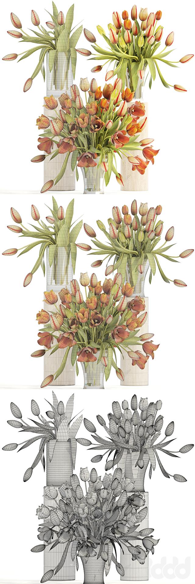 Коллекция цветов 4. Тюльпаны.