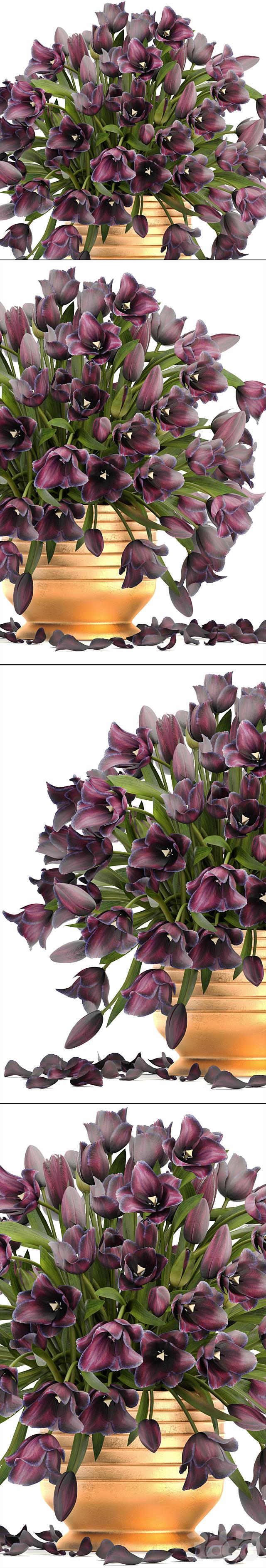 Коллекция цветов 7. Тюльпаны.