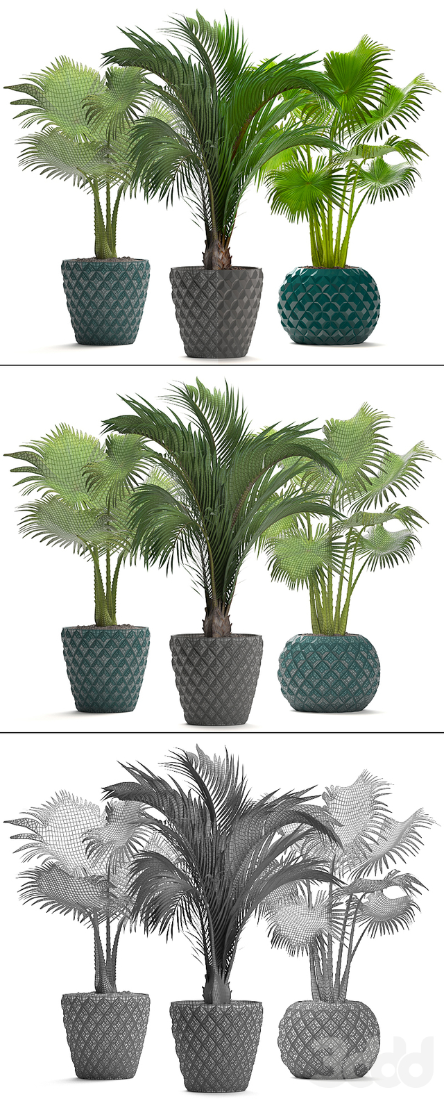 Коллекция растений 214. Пальмы.