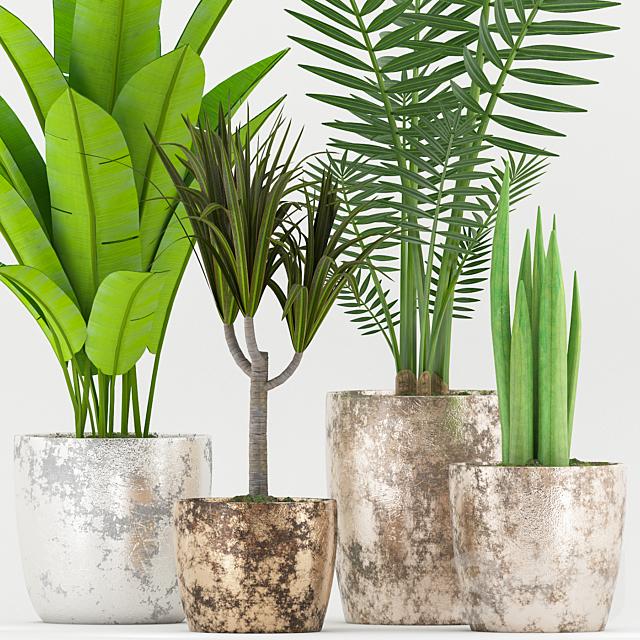 Plant 54