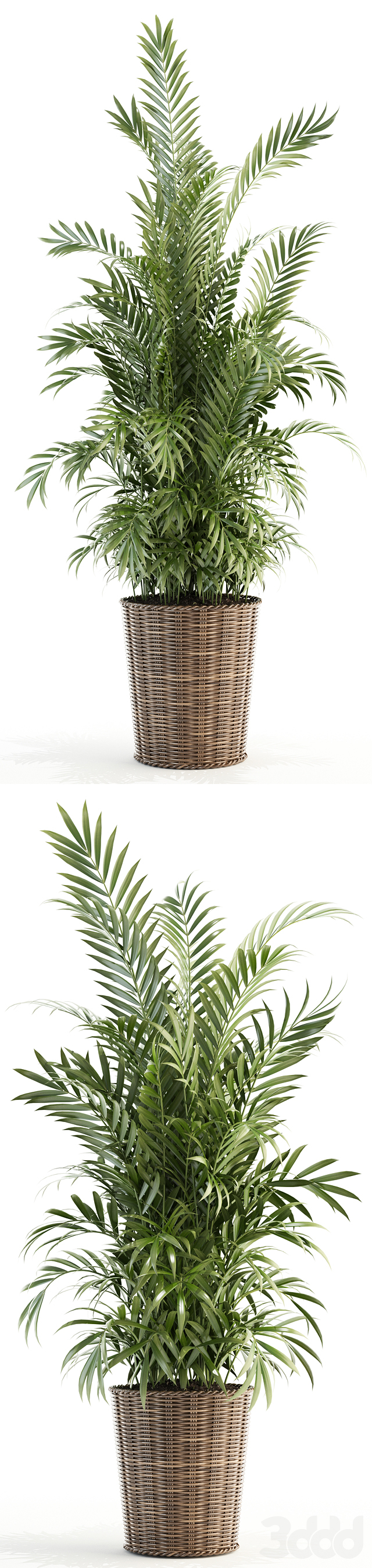 Plants collection 93
